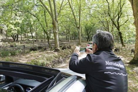 Na Tapada de Mafra houve oportunidade de interação com os animais