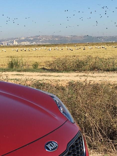 A observação de aves foi um dos pontos altos do programa